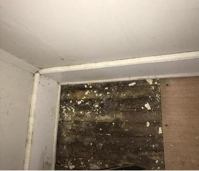 Mold Remediation Where Mold Lives